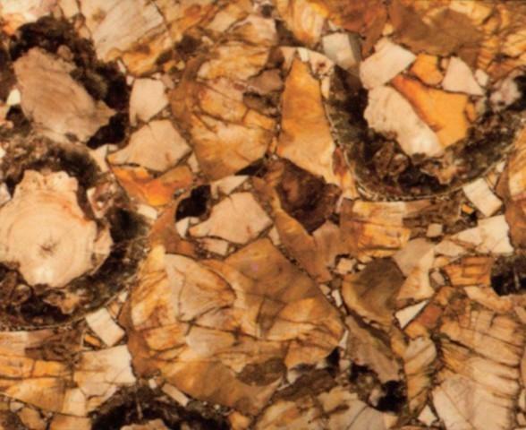Scheda tecnica: PETRIFIED WOOD, pietra semipreziosa naturale lucida della Namibia