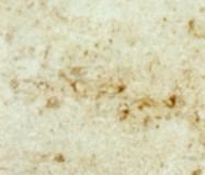 Scheda tecnica: PIERRE DE NOYANT DEMI-FINE, arenaria naturale levigata francese