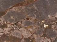 Scheda tecnica: BRECCIA ANTICA, breccia naturale lucida italiana