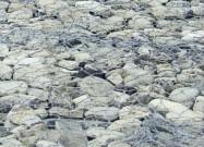 Scheda tecnica: PIETRA SERENA, calcare naturale burrattato italiano