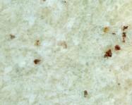 Scheda tecnica: WHITE TYPE ROMANO, granito naturale lucido brasiliano