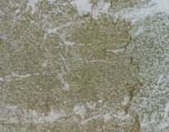Scheda tecnica: LUX SAN MARCO, marmo naturale bocciardato italiano