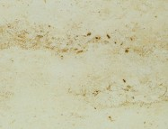 Scheda tecnica: JURA GELB, marmo naturale levigato tedesco