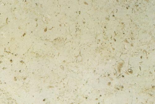 Scheda tecnica: TRANI CIOCCOLATO, marmo naturale lucido italiano