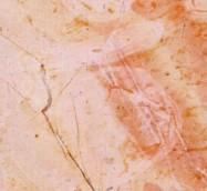 Scheda tecnica: R.B., marmo naturale lucido palestinese