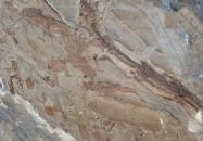 Scheda tecnica: ILLUSION BRONZE, marmo naturale lucido turco