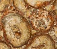 Scheda tecnica: PETRIFIED WOOD BROWN, pietra semipreziosa naturale lucida della Namibia