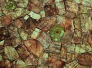 Scheda tecnica: RED FELDSPATH WITH AMMONITES, pietra semipreziosa naturale lucida sudafricana