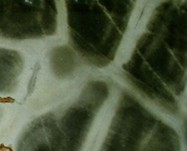 Scheda tecnica: Turtle, quarzite naturale lucida brasiliana